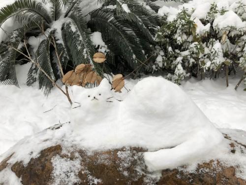snowcat.jpg